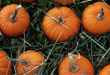 350thumb halloween facts