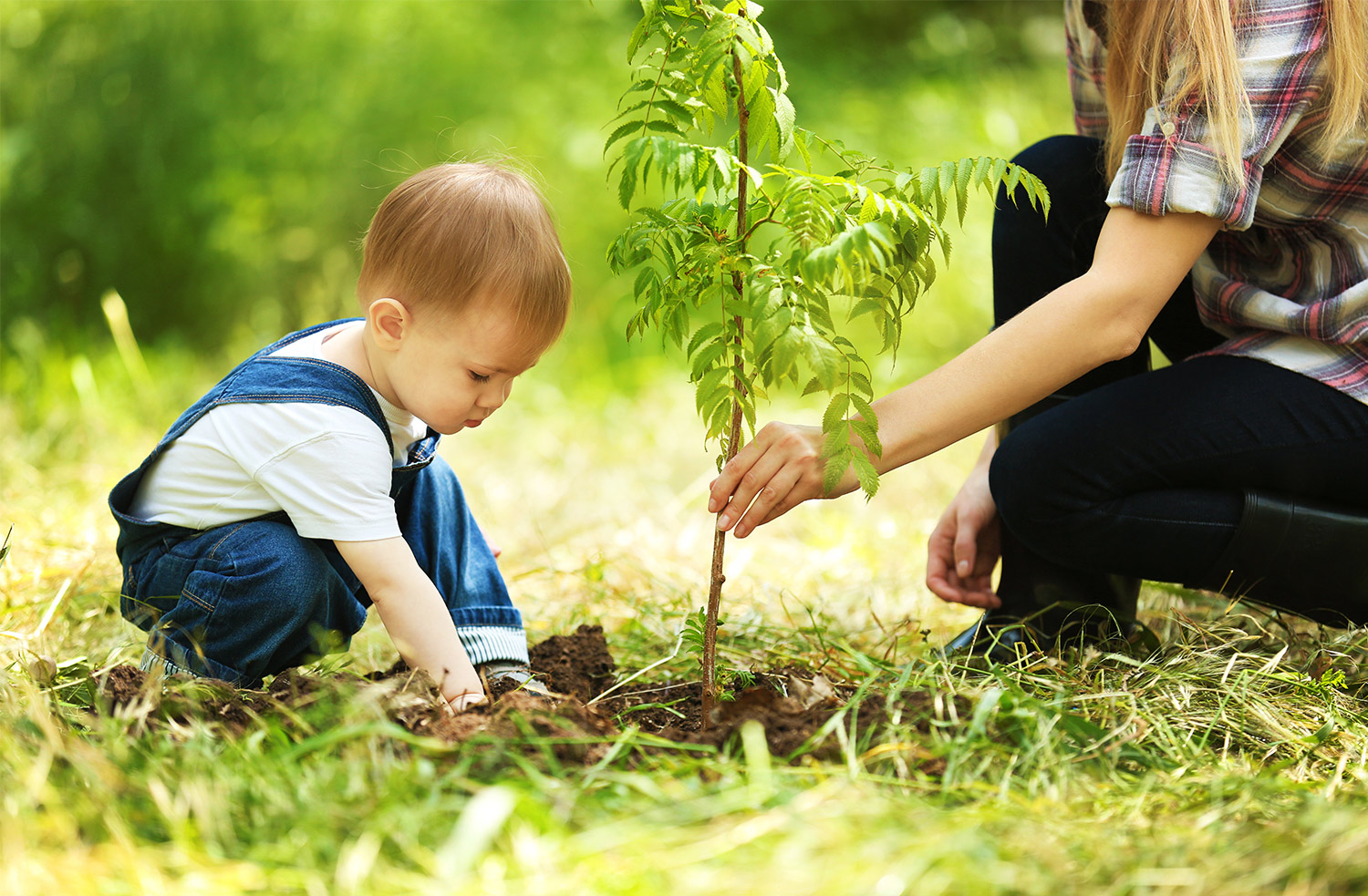 PLANTING-tree-Birthday-Traditions