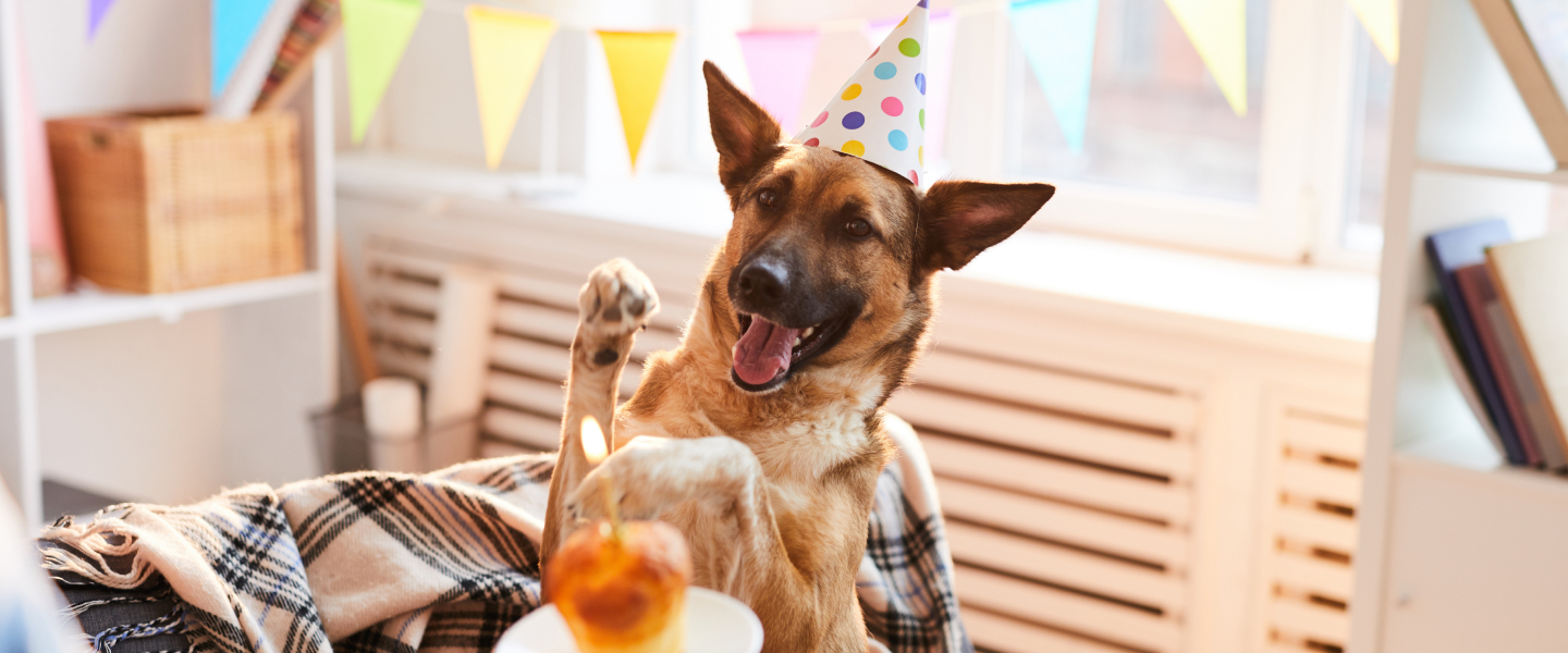 Dog Smiling Party Hat